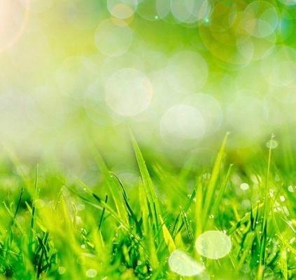 lawn-in-summer-850x500 (1)
